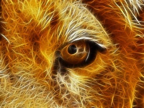 abstract-lion-eye-wallpaper-free-image-e