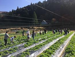 e-nigiwai-farm.JPG