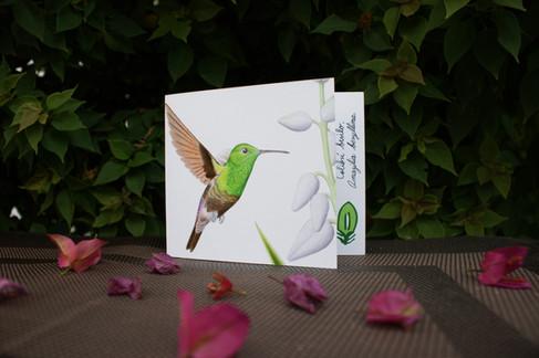 Tarjeta plegable   Greeting card