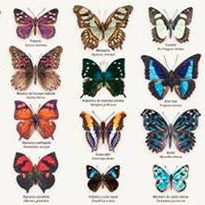 Cartel: Mariposas de México
