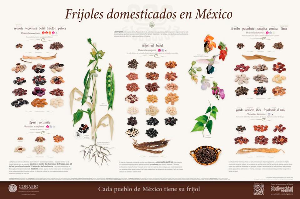 Cartel: Frijoles   Poster: Beans