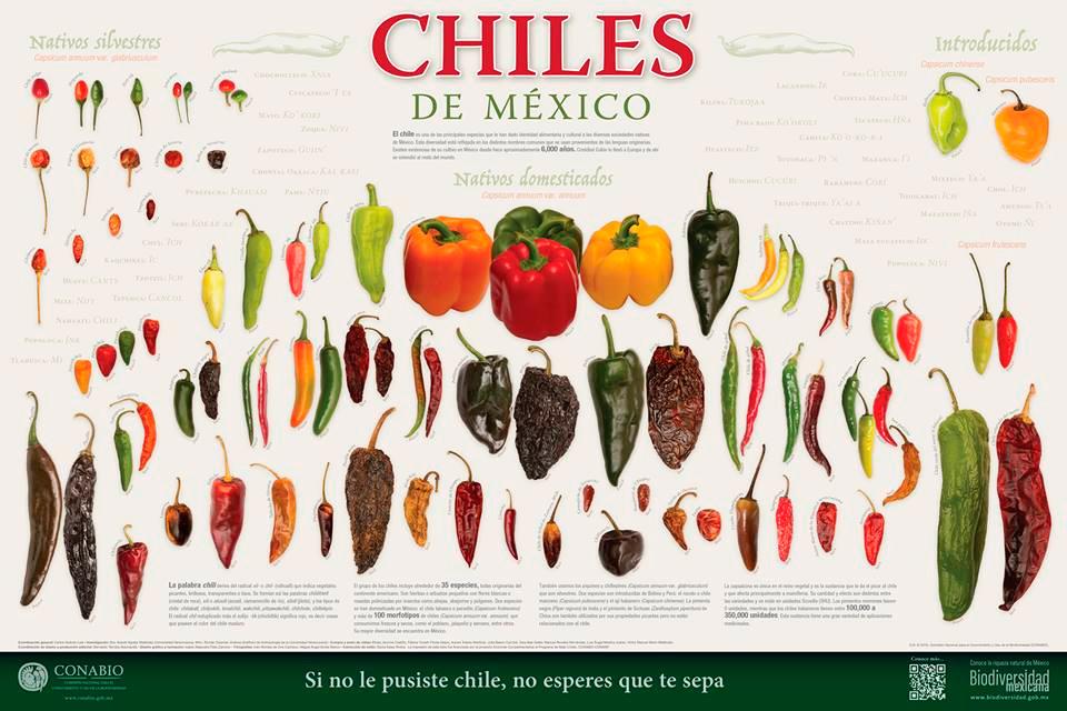 Cartel: Chiles | Poster: Chillis