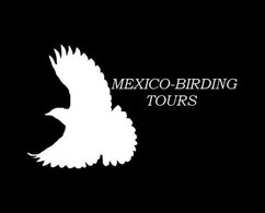 Mexico-Birding Tours