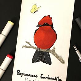 Papamoscas Cardenalito | Vermilion Flycatcher
