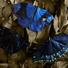 Mariposas de hojas secas <ejemplos>   Butterflies made of dry leafs <examples>