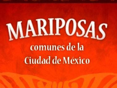 Guía de Campo: Mariposas comunes de la Ciudad México