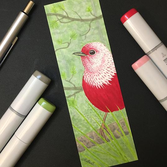 Chipe Rosado | Pink-headed Warbler