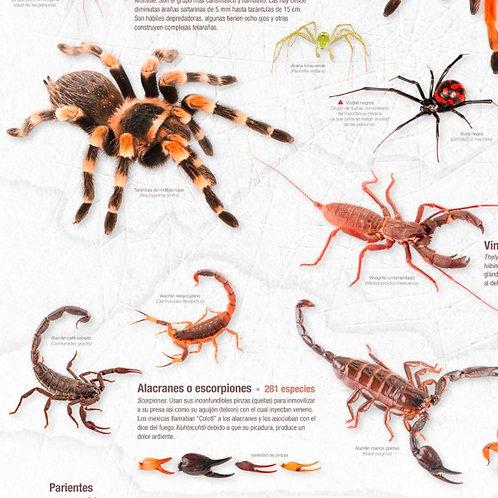 Cartel: Arañas, ácaros, alacranes y otros arácnidos de México