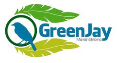 Green Jay Mayan Birding