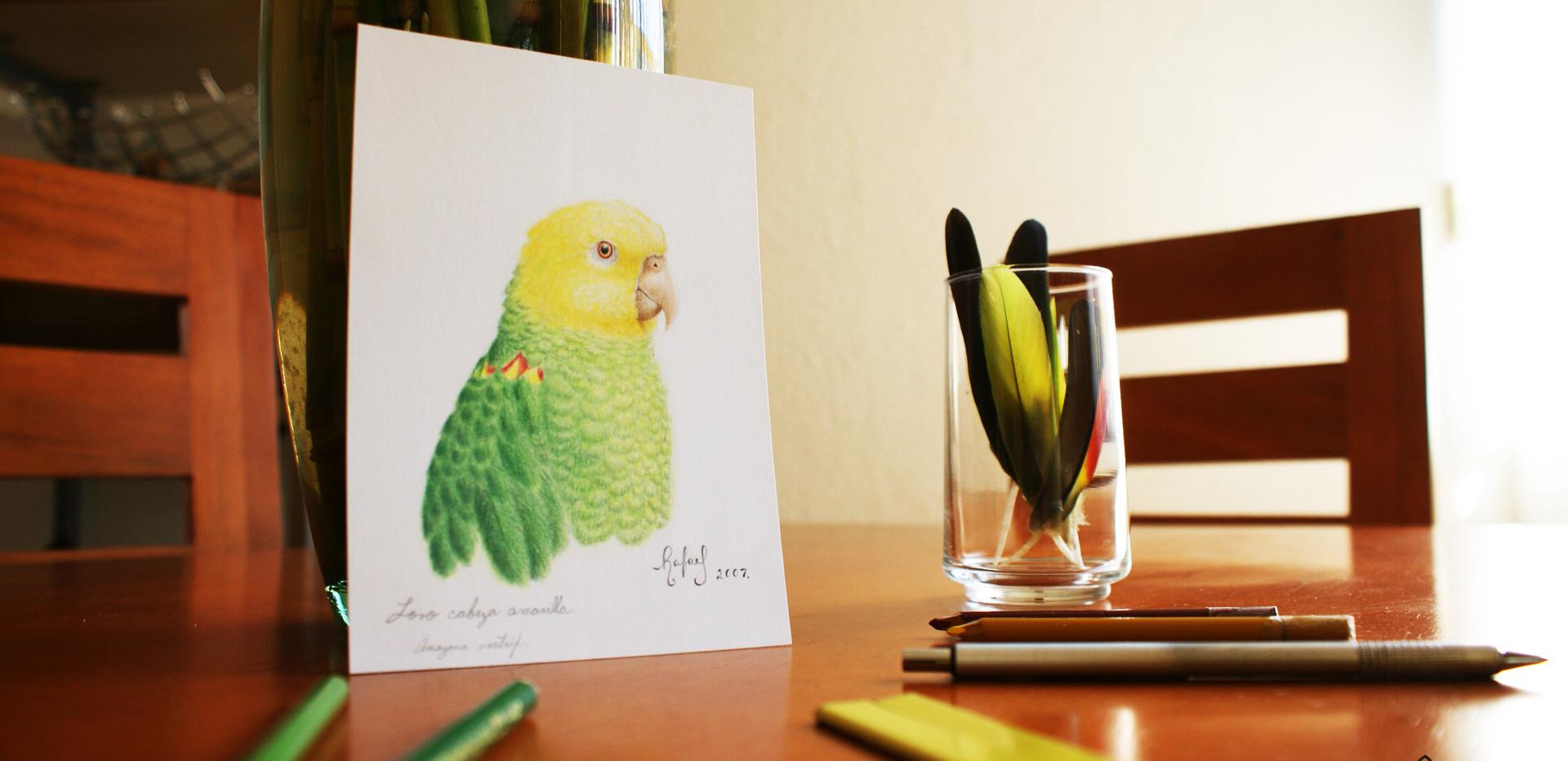 Loro Cabeza Amarilla | Yellow-headed Parrot