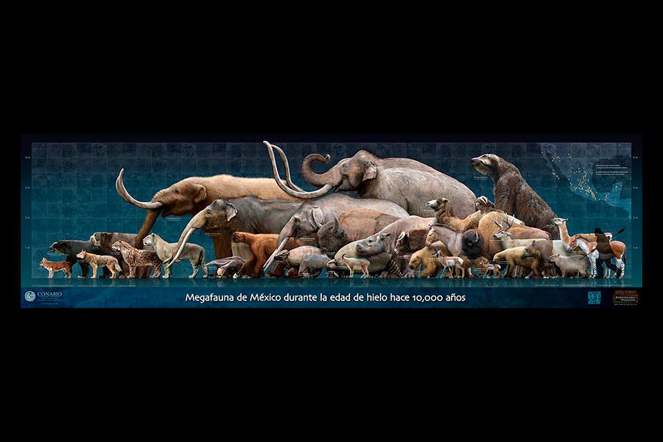 Cartel: Megafauna   Poster: Megafauna