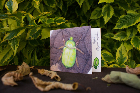 Tarjeta plegable | Greeting card