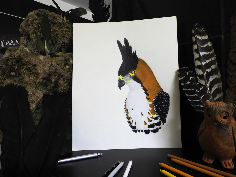 ¡Nuevas Ilustraciones! | New Illustrations!