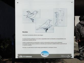 Proceso de ilustración: bocetos