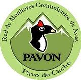 Red Pavo Cacho.jpg
