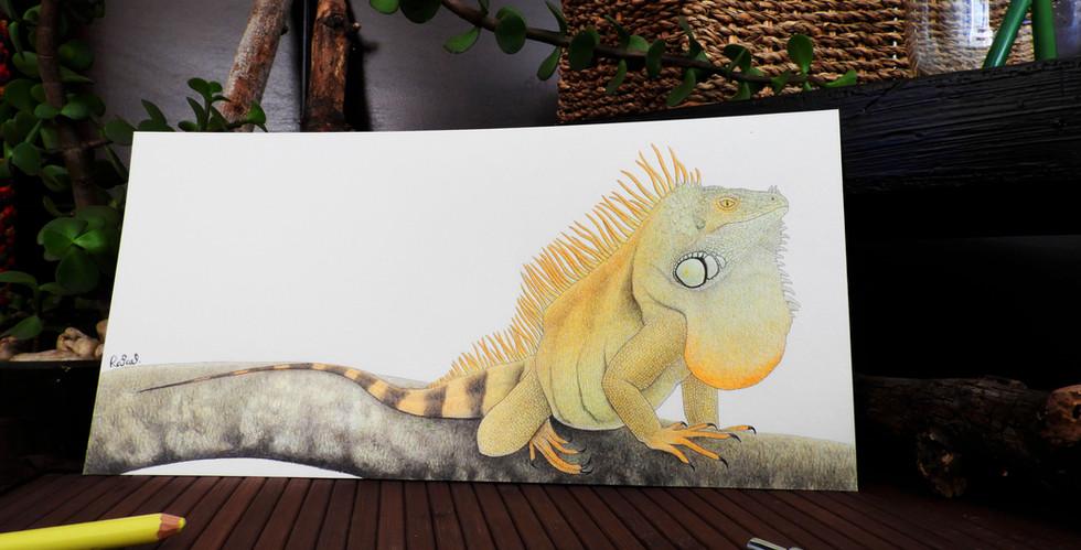 Iguana Verde | Green Iguana