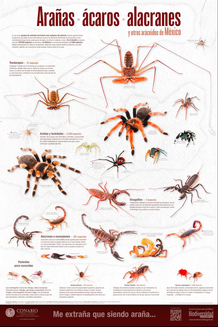 Cartel: Arácnidos   Poster: Arachnids