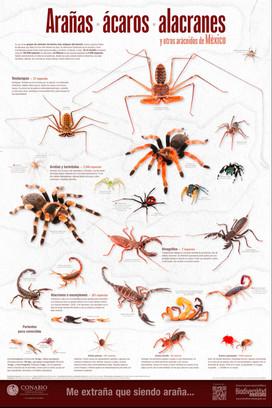 Cartel: Arácnidos | Poster: Arachnids