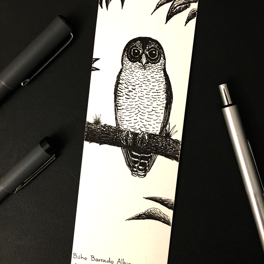 Búho Barrado Albinegro | Black-and-white Owl