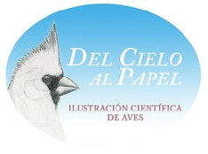 Del Cielo al Papel: ilustración científica de las aves
