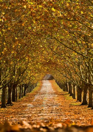Bowral Autumn Country Lanes
