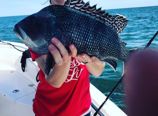 Sea Bass season opens on May 18th