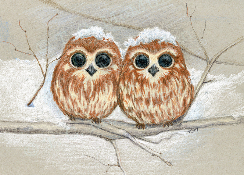 Snowcapped Owls