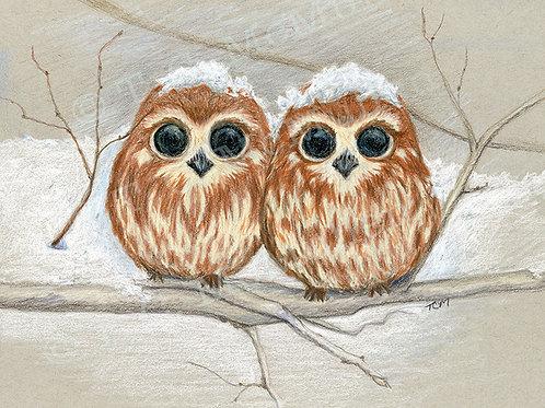 Snowcapped Owls Print