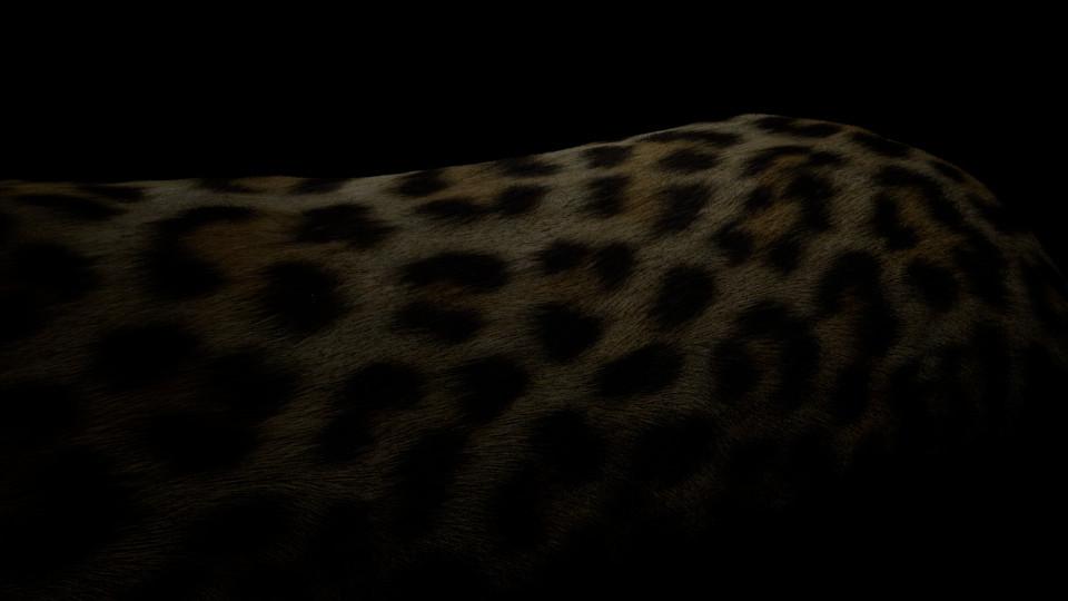 leopard_test1.jpg
