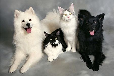 Lemmikkieläimet