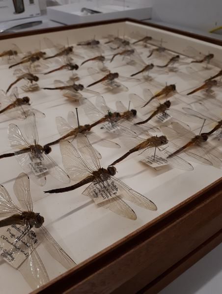 Museum specimens at the Natural History Museum of London.