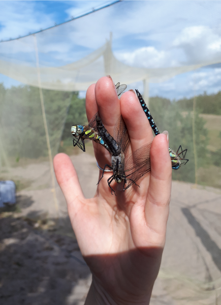 A handful of migrant hawkers.