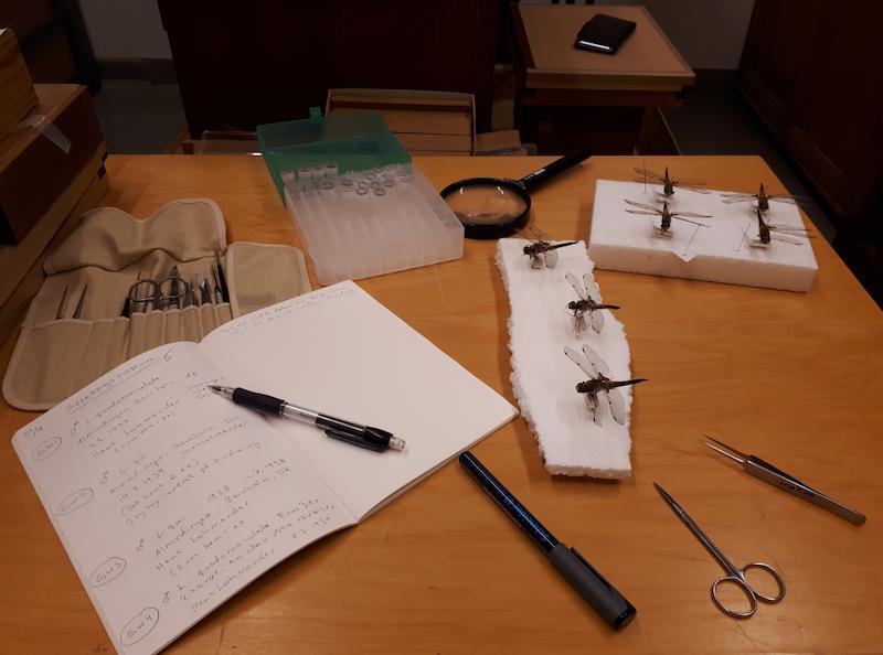 Museum sampling kit