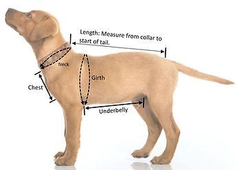 Measure_up_full_body.JPG