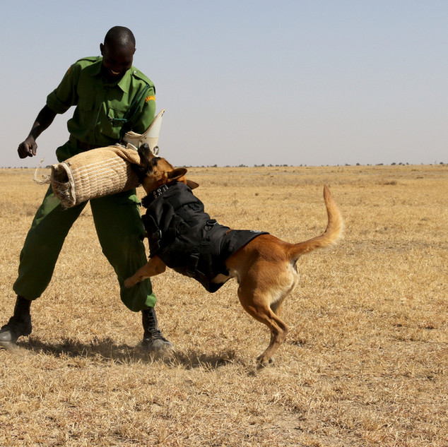 Anti-poaching dogs