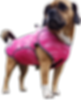 2018-08-27_10-removebg-preview.png