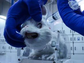 #SaveRalph short film aims to ban animal cosmetics testing in SA