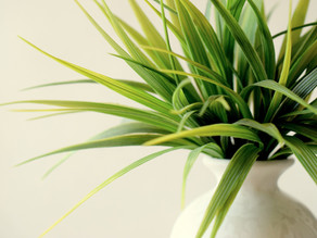 The benefits of incorporating greenery in you salon space