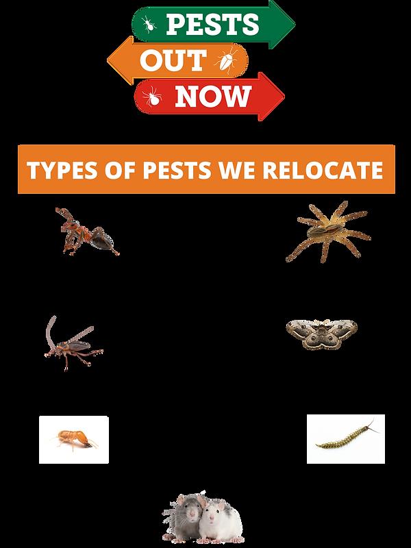 Compassionate non-toxic pest relocation