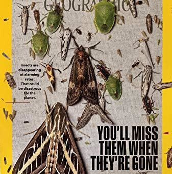 Many insects are critical to humanity's survival and they are disappearing.