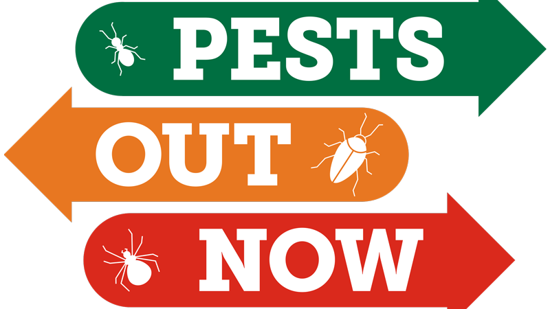 One Star Pests Out Now Service