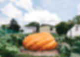giant-pumpkin-10.jpg