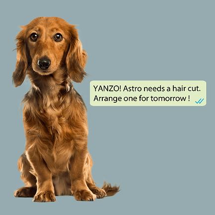 Pet Ad Magnet 300-01-min.png