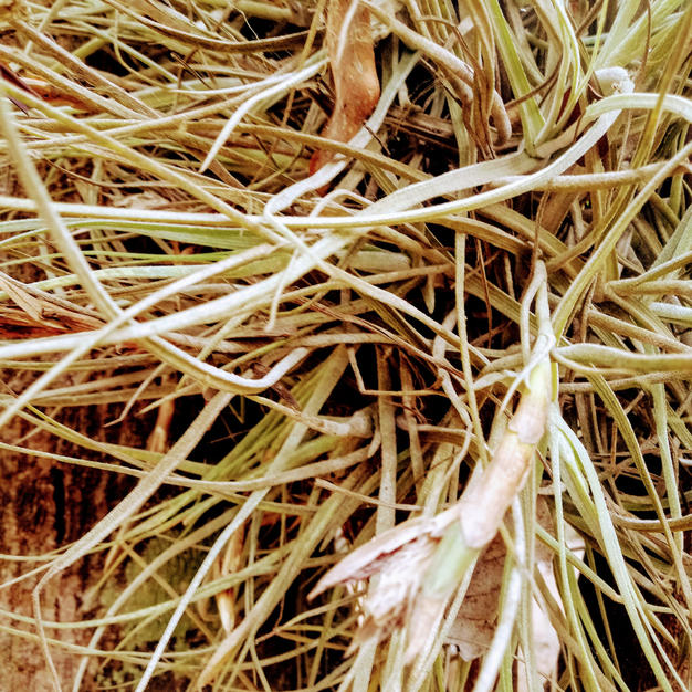 Spidery plant a.jpg
