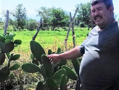 Visit to a Nopal Cactus Farm