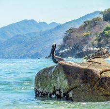 Pelican Rock.jpg
