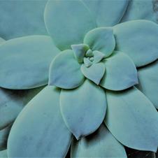 Cactus c.jpg