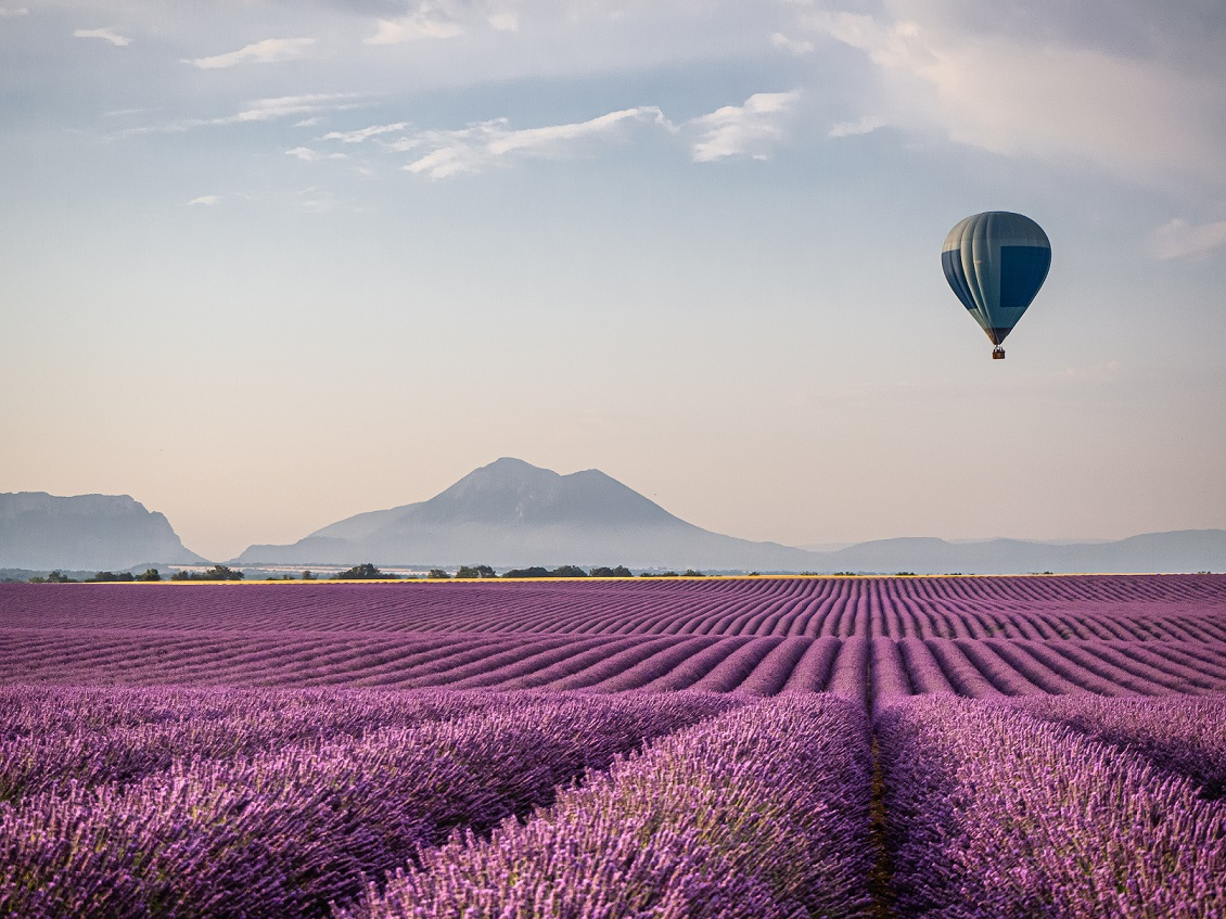 Hot air balloon over morning lavender fi