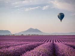 Hot air balloon over morning lavender fi