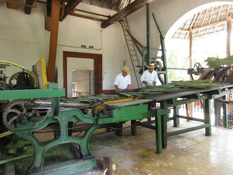 The Era of Yucatan Green Gold